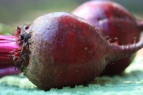If You Can't Beet Them, Enjoy Them